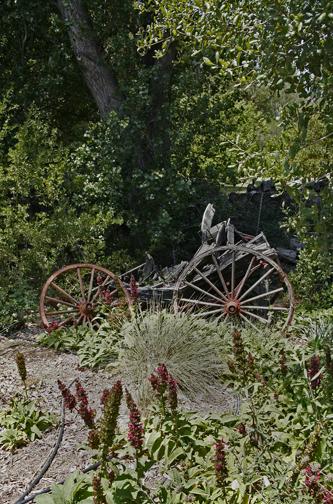 Cart & Salvia